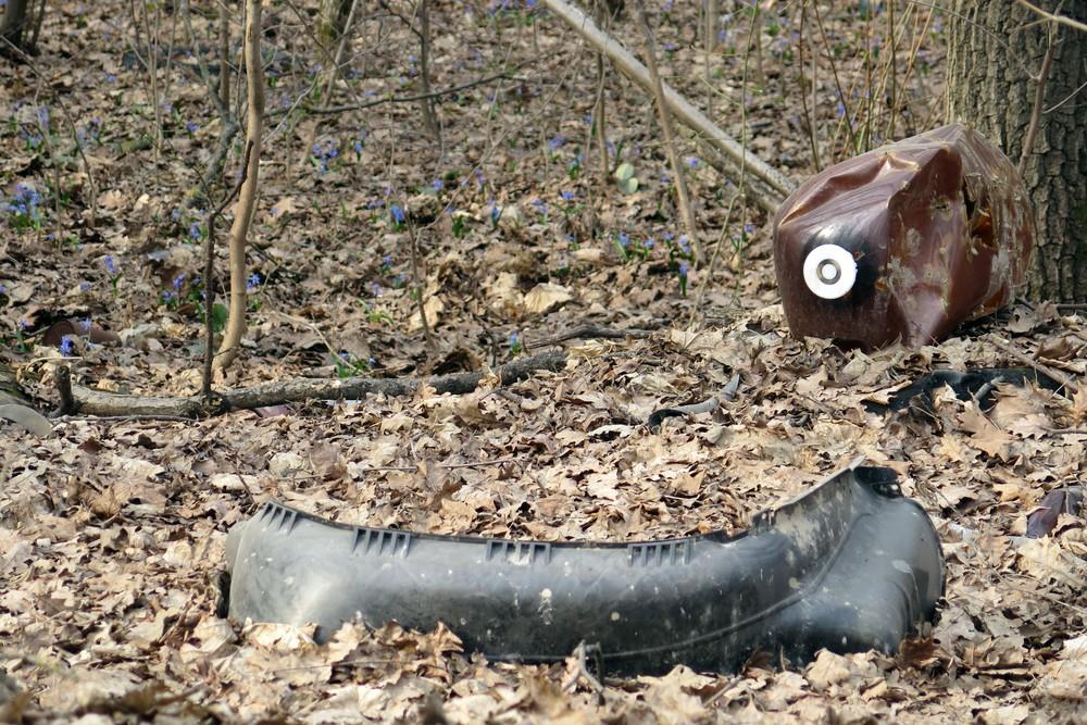 Подснежники в Паженьском лесу сосуществуют с мусором